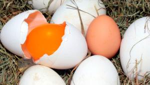 Вся правда о яичном желтке