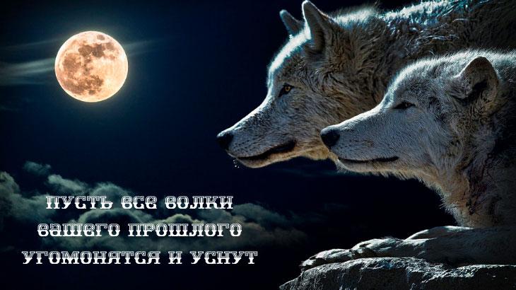 Пусть-все-волки-вашего-прошлого-угомонятся-и-уснут