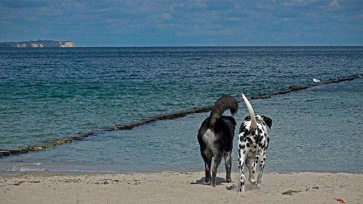 собаки-друзья1